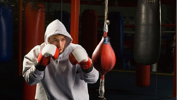 31-Boxer-in-Training-620x350